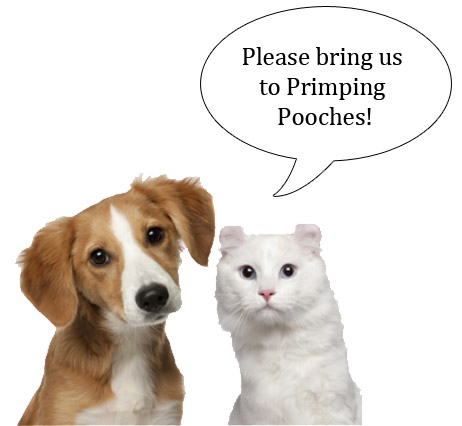 Cat and Dog asking owner to take them to Primping Pooches in Alaska for grooming.