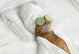 cat with cucumbers on eyes getting groomed in Anchorage Alaska.