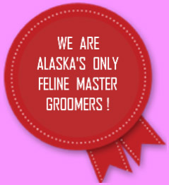 red badge adverstising the only feline master groomer in Anchorage, Alaska.